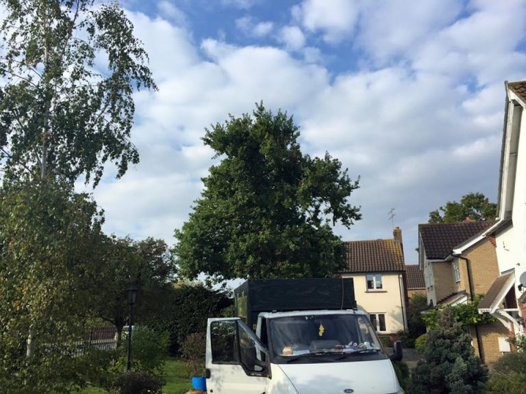 Essex Tree Services Tree King Felling Contractors
